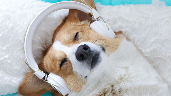 dog listening to guided meditation
